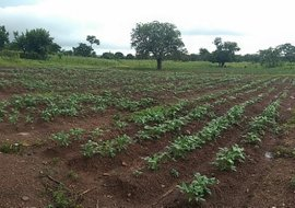 TWIGA insurance in Africa vulnerability farmers