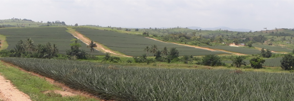 TWIGA irrigation for pineapple farmers through drones